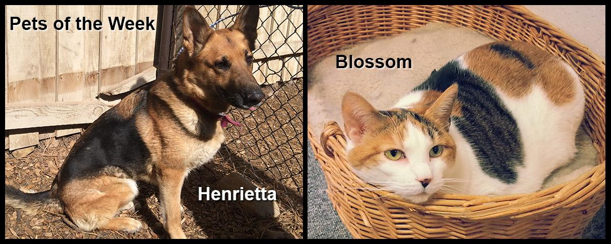Pets of the Week - Henrietta and Blossom