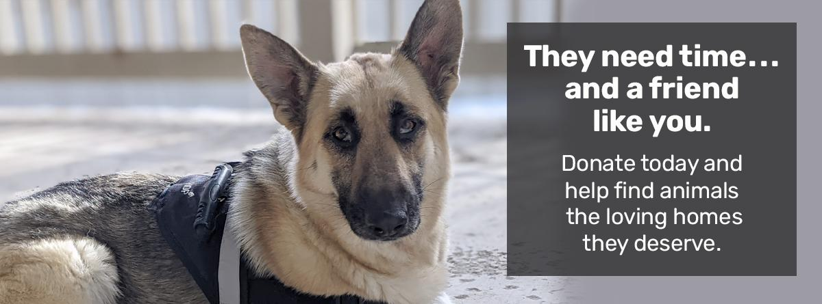 Donate today and help find animals the loving home they deserve.